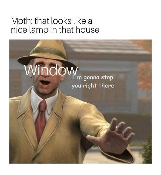 These Weird Af Moth Memes Are Completely Taking Over Reddit Star Wars Humor Funny Star Wars Memes Star Wars Memes