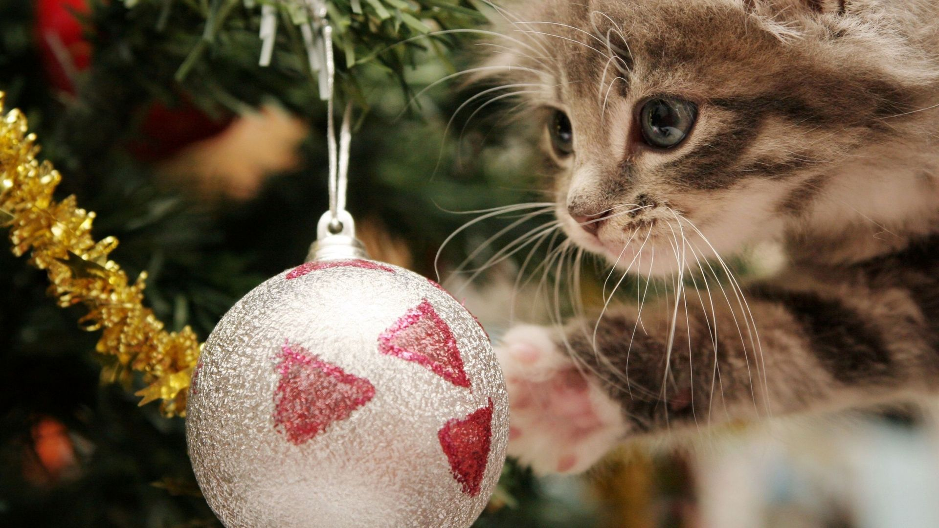 super-cute-christmas-cat-full-hd-wallpaper-christmas-ball-1080p