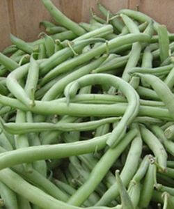 Container Gardening How To Grow Beans In Pots Gardening Learning With Experts Growing Beans Purple Beans Garden Plants Vegetable