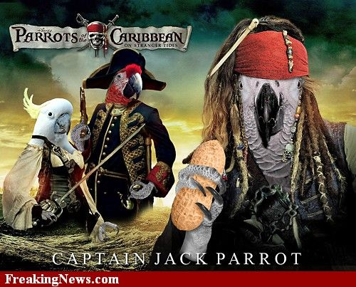 Parrots Of The Caribbean