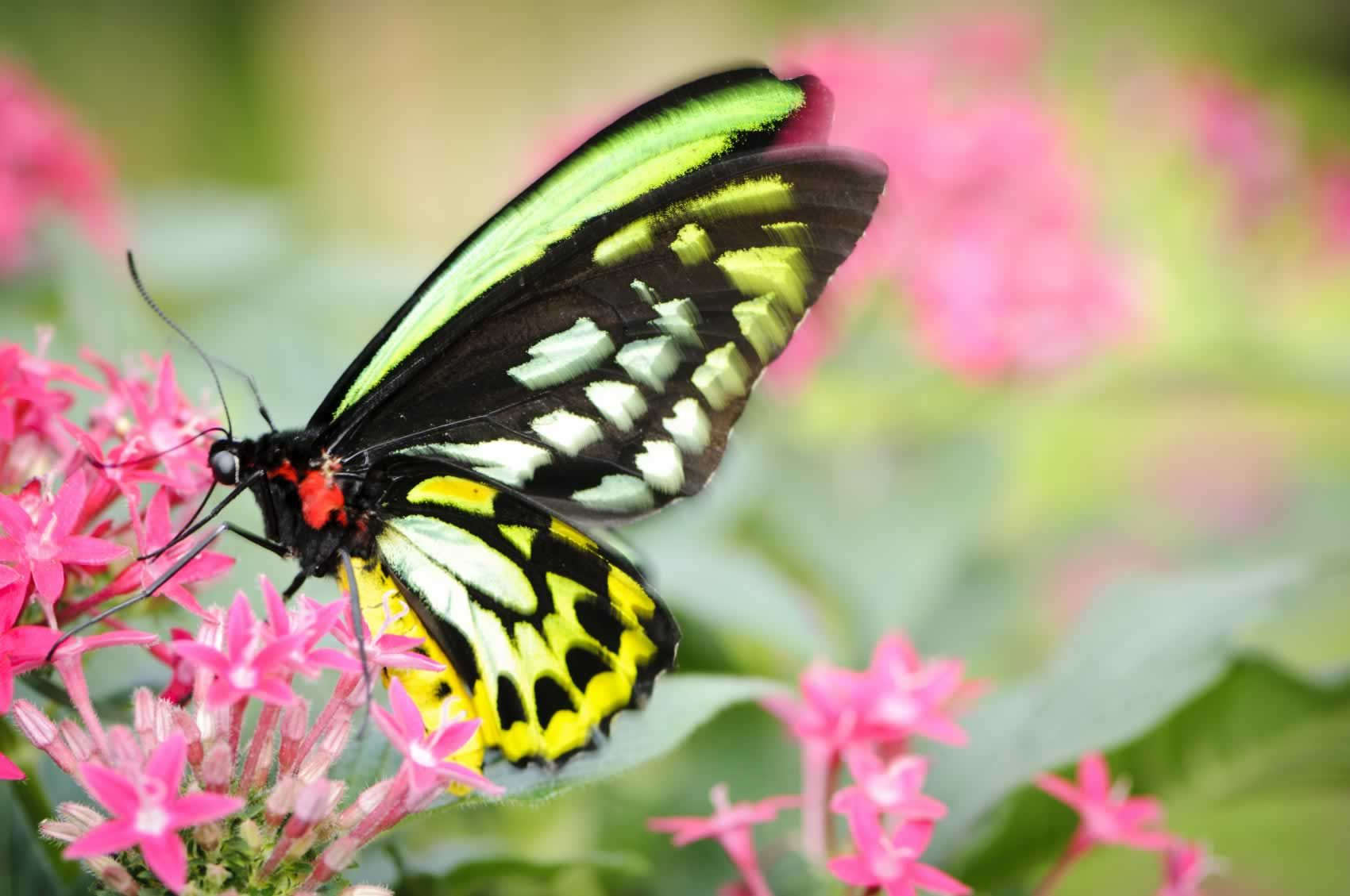Butterfly Releases Are Cruel and Often Fail—Here's Why