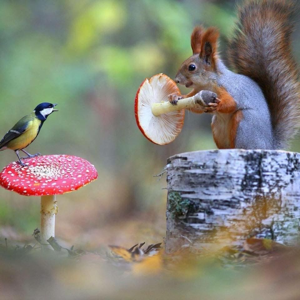 Pin by David James on Animals Arboreal Animals, Cute