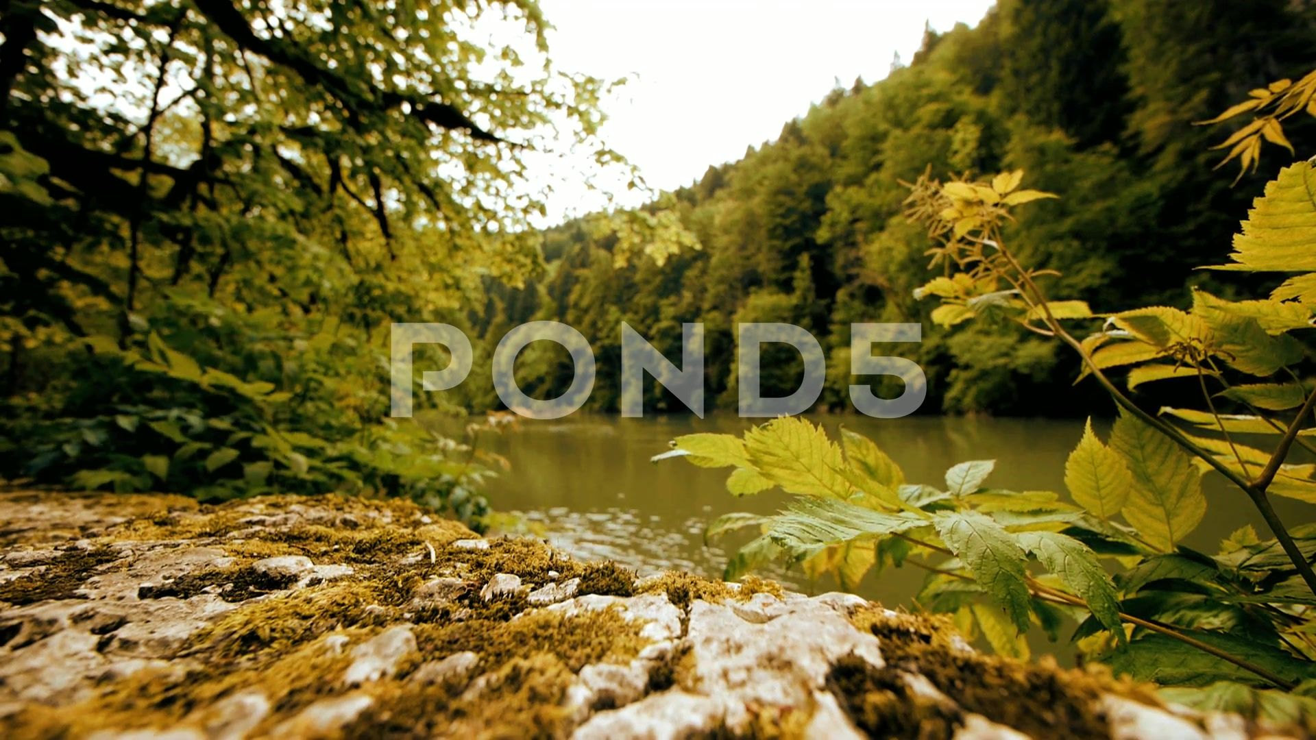 River forest green nature Stock Footage,greenforest