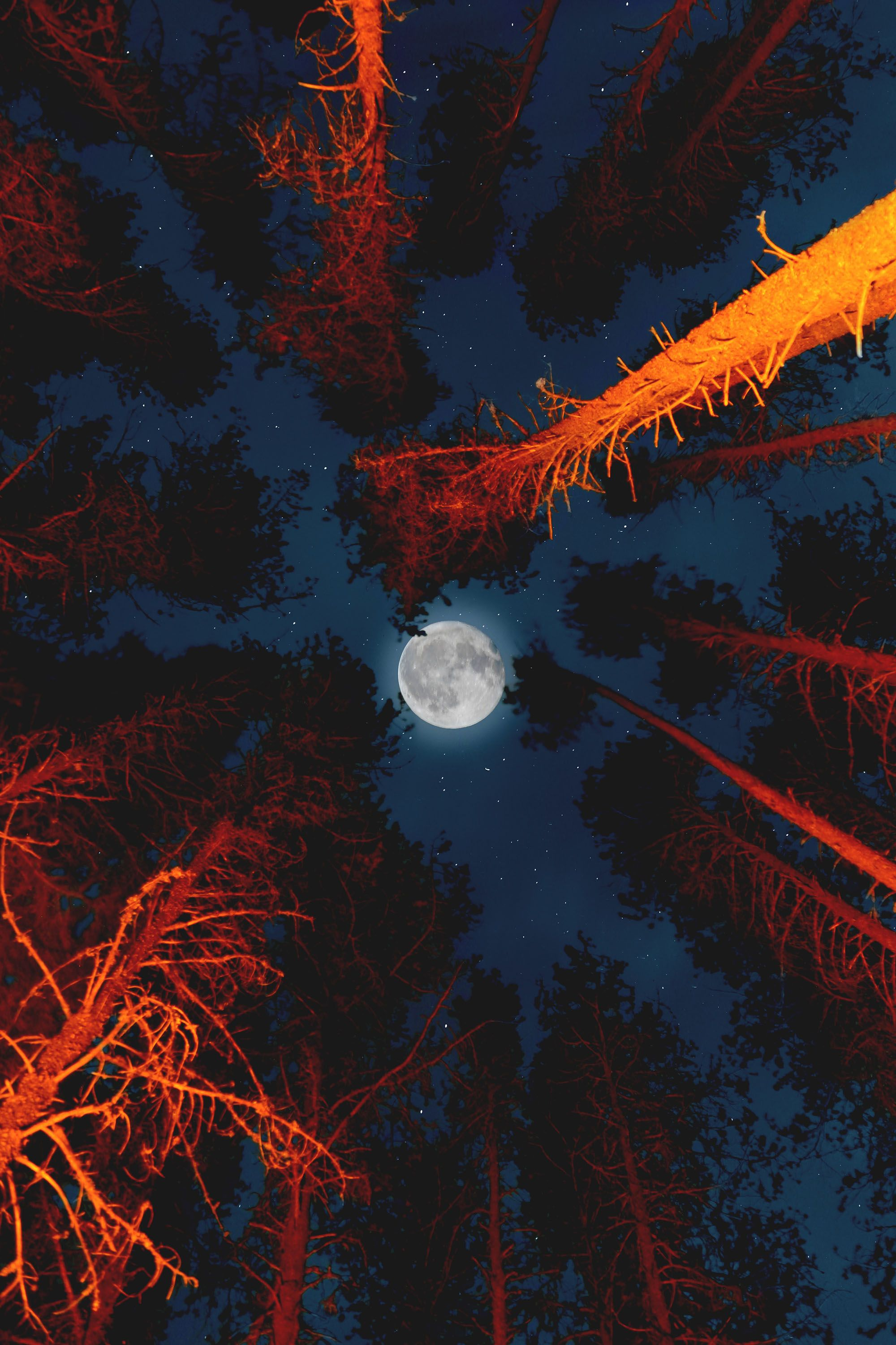Pin By Suzanne Brown On Night Skies Cute Wallpapers Free Halloween Pictures Moon Photography
