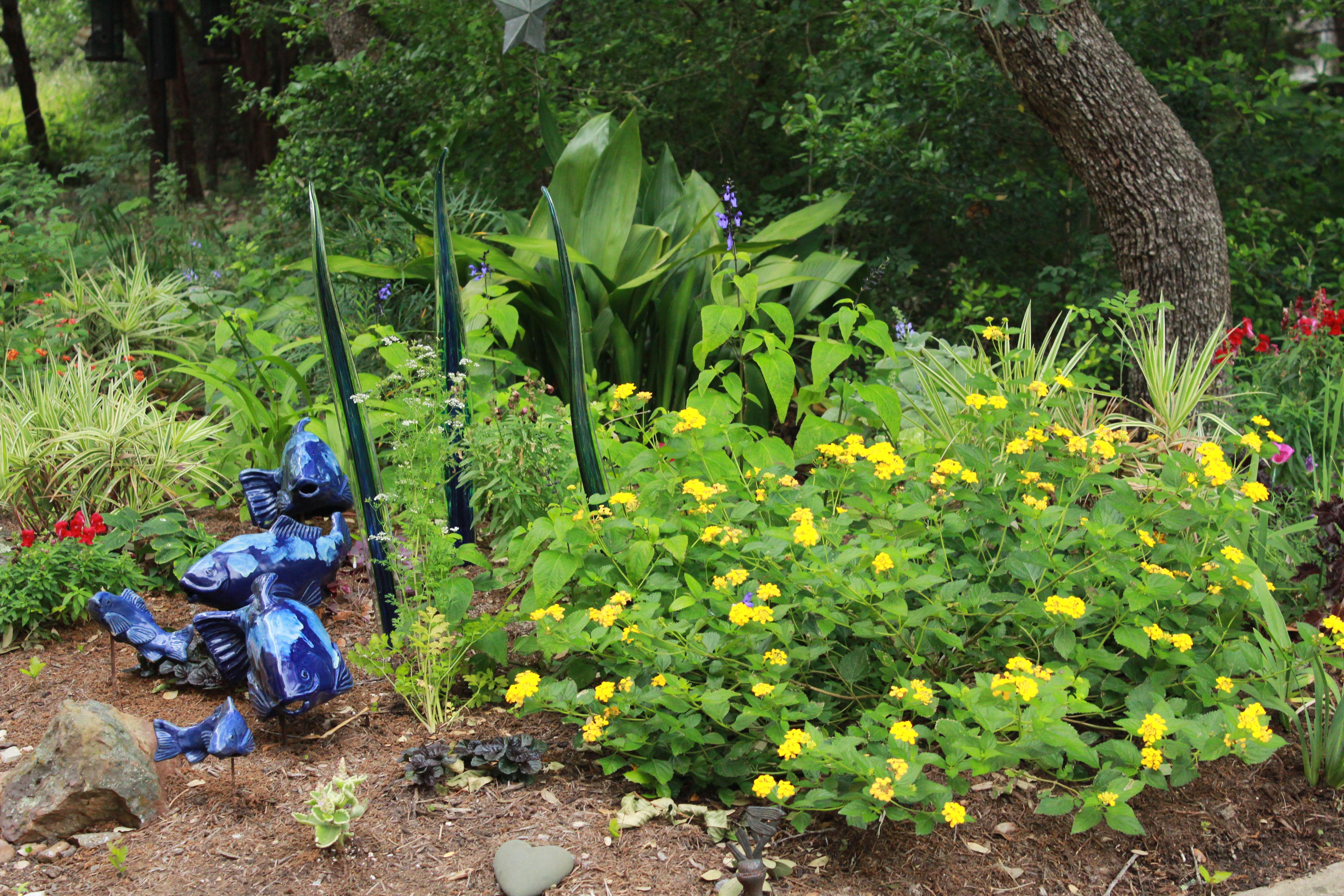 New Gold Lantana In 2020 Lantana Plants