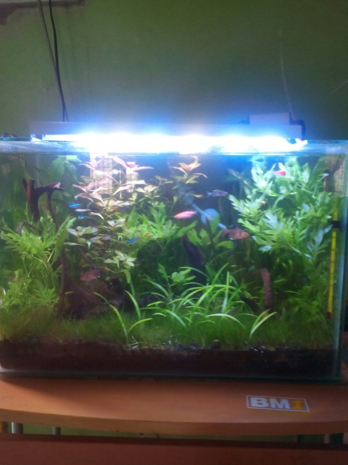 5 Month Aquascape With Dirt Substrate