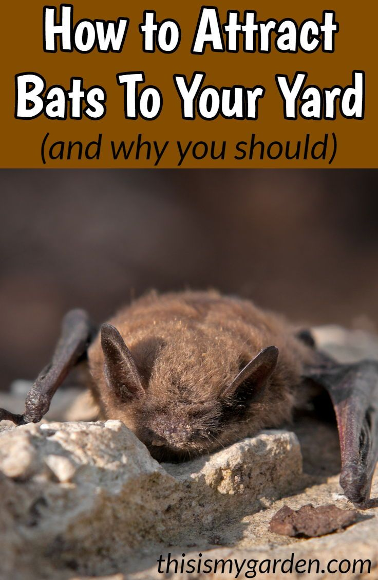 The Benefits Of Attracting Bats To Your Yard And How To