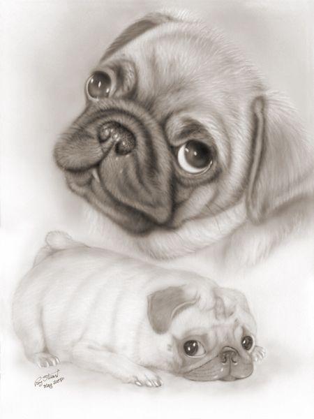 Pug Pictures And Prints Pugs By Roy Stuart Pug Liquid Lead Art