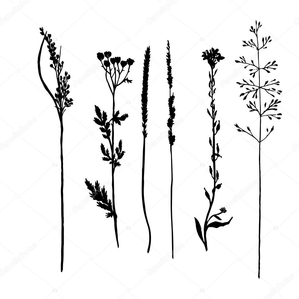 Vector set of wild flowers and cereal herbs silhouettes ...