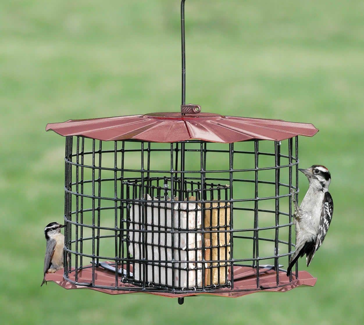 Duncraft Com Copper Baffled Suet Feeder Squirrel Proof Bird Feeders Suet Feeder Bird Feeders