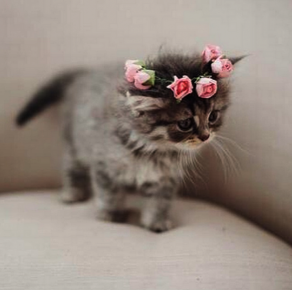 Cute Kittens Playing With Puppies Cute Cats Jokes Cute Cat Breeds Beautiful Kittens Cute Baby Animals