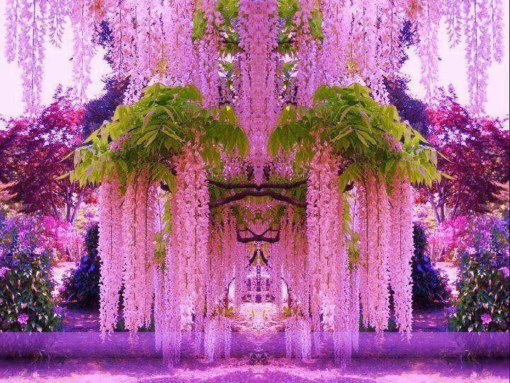 Japanese Wisteria Wisteria Garden Beautiful Gardens Gardens Of The World