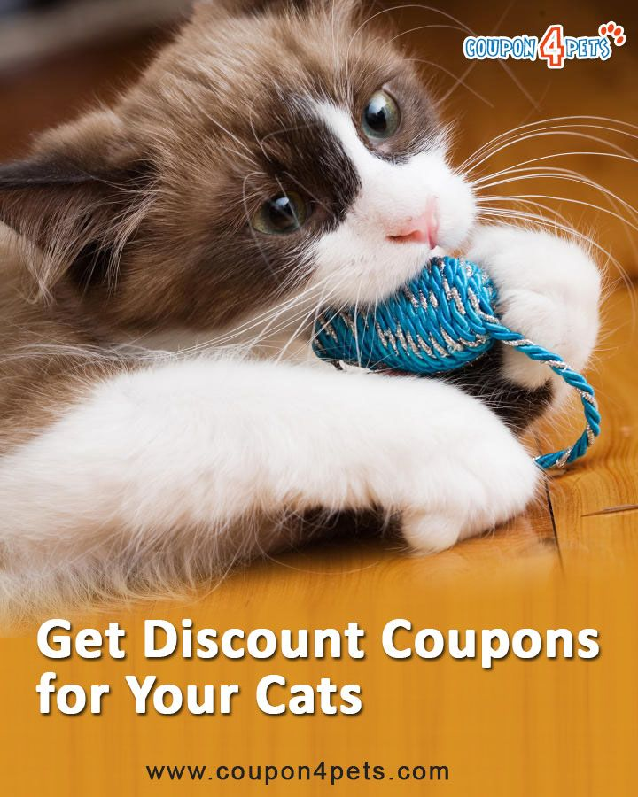 Hugs Pet Products Coupon Codes Promo Code Discount Codes Find And Share Hugs Pet Produ Pets Pet Supermarket Buy Pets