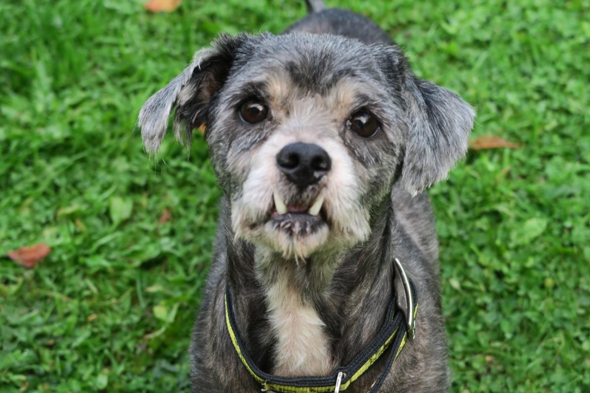 10 27 16 Milo Dogs Trust Dog Adoption Dogs Dogs Trust