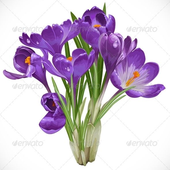 Realistic Graphic DOWNLOAD (.ai, .psd) :: http://vector-graphic.de/pinterest-itmid-1007111834i.html ... Crocuses ...  beauty, bloom, blue, bud, crocus, fine, first, floral, flower, garden, green, ground, hot, leaves, light, meadow, nature, open, petal, plant, purple, scent, season, small, spring, stem, tiny, vector, warm, white  ... Realistic Photo Graphic Print Obejct Business Web Elements Illustration Design Templates ... DOWNLOAD…