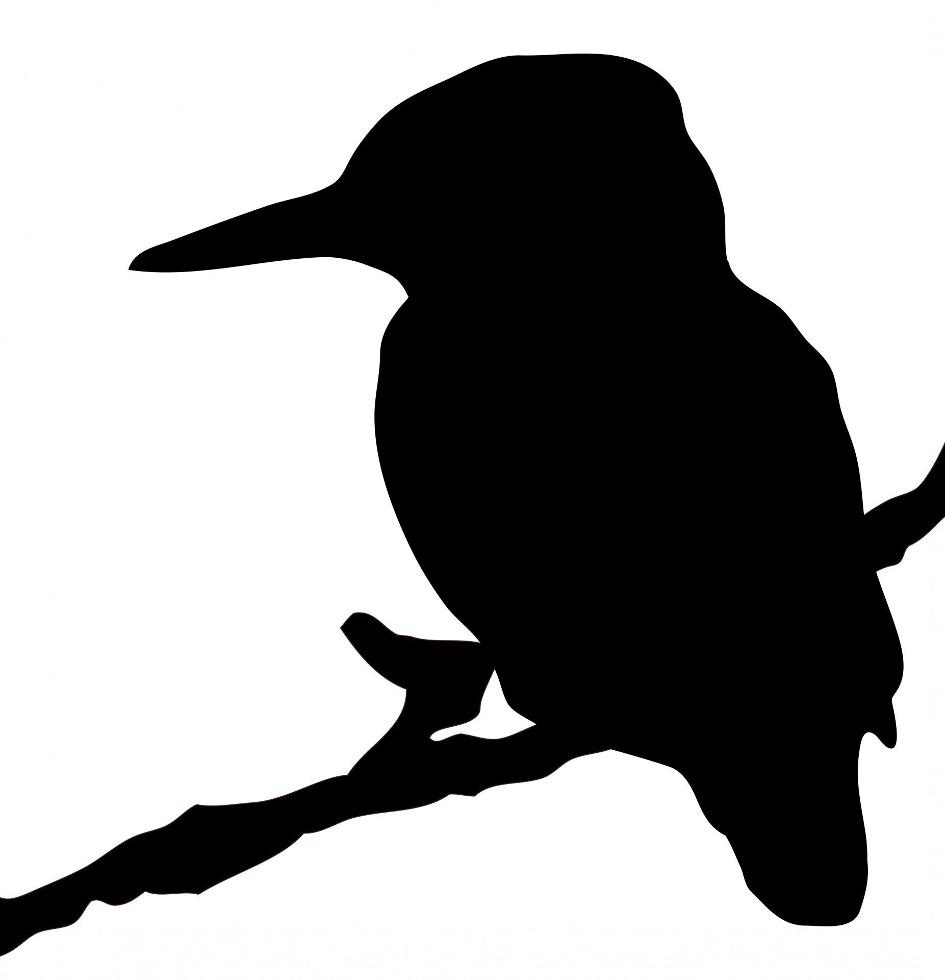 Kingfisher Bird Silhouette Clipart Free Stock Photo Public