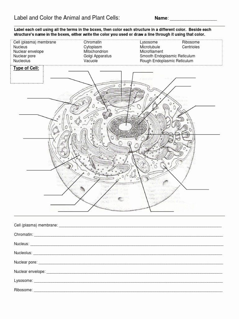 Animal And Plant Cells Worksheet Beautiful Label And Color The Animal And Plant Cells Cells Worksheet Plant Cells Worksheet Animal Cells Worksheet