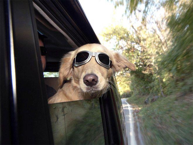 Diese 14 Hunde Lieben Es Ihren Kopf Aus Dem Autofenster Zu Hangen Und Ziehen Dabei Total Verruckte Grimassen Hunde Lustige Tiere Tiere