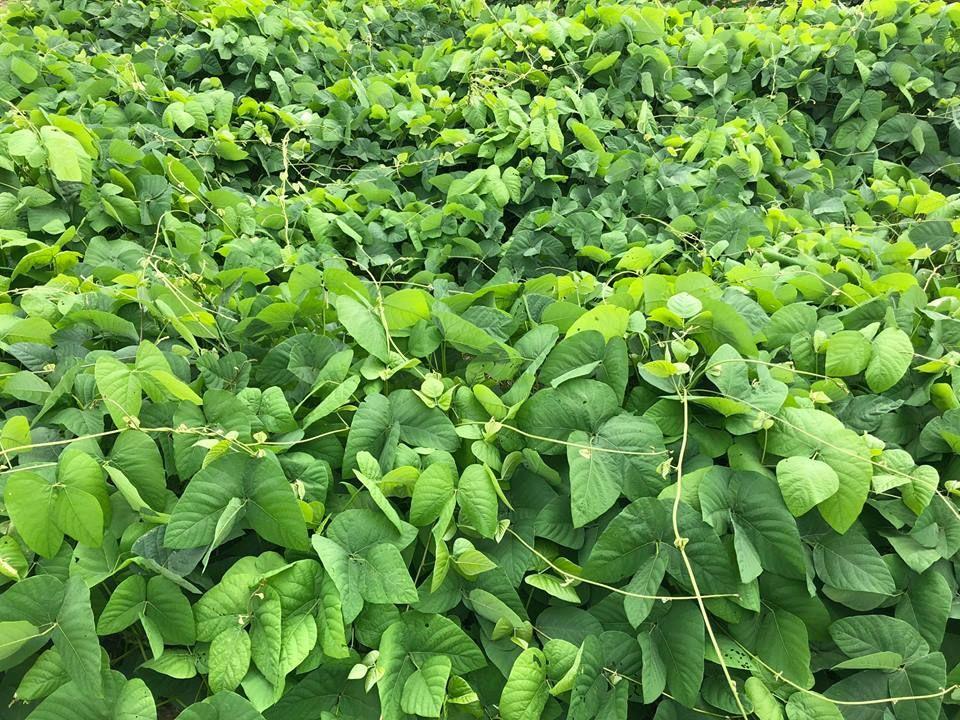 Abono Orgánico | Industria Agroecológica Peruana Tocache