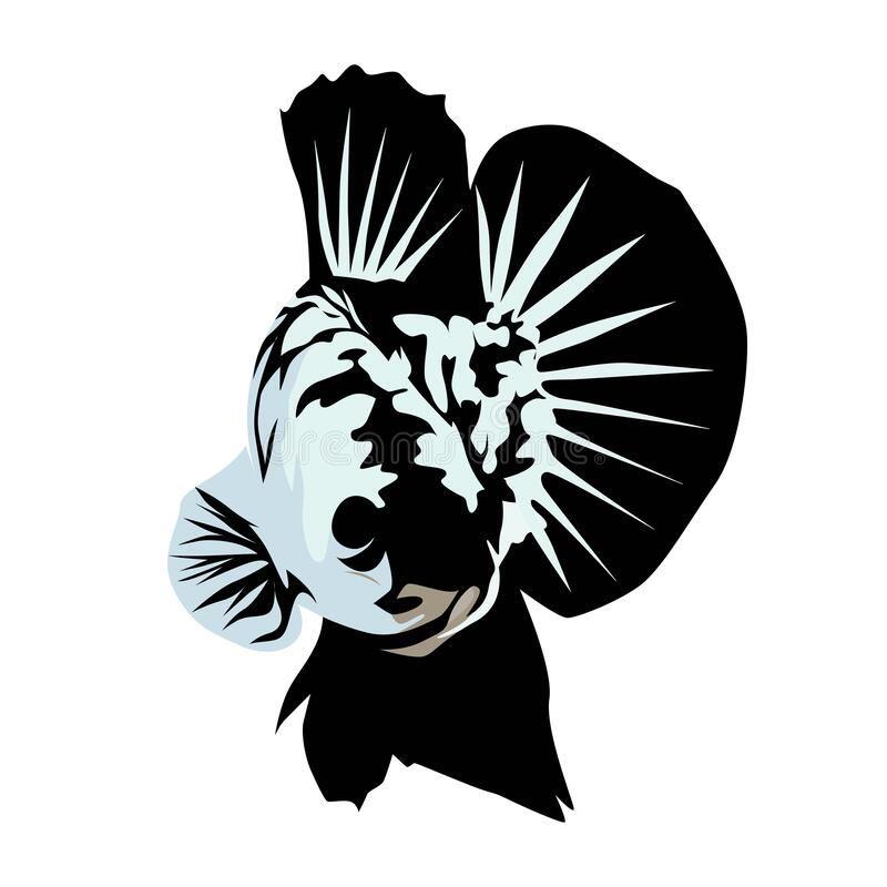 Illustration About Betta Samurai Fish Vector Art Design And Illustration For Logo Illustration Of Logo Design Figh Vector Art Design Logo Betta Betta Vector