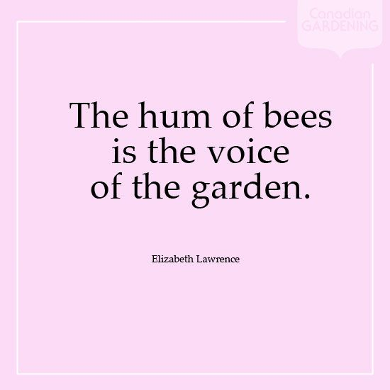 Hum Quote Enchanting The Hum Of Bees Is The Voice Of The Garden Elizabeth Lawrence