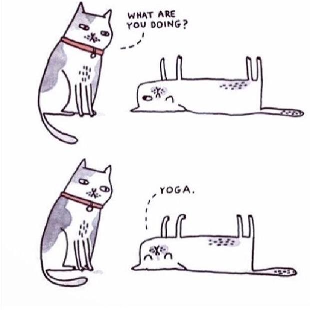 Мая праздник, смешные картинки про йогу мемы