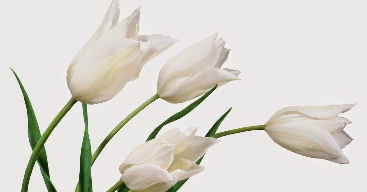Wallpaper Bunga Lily
