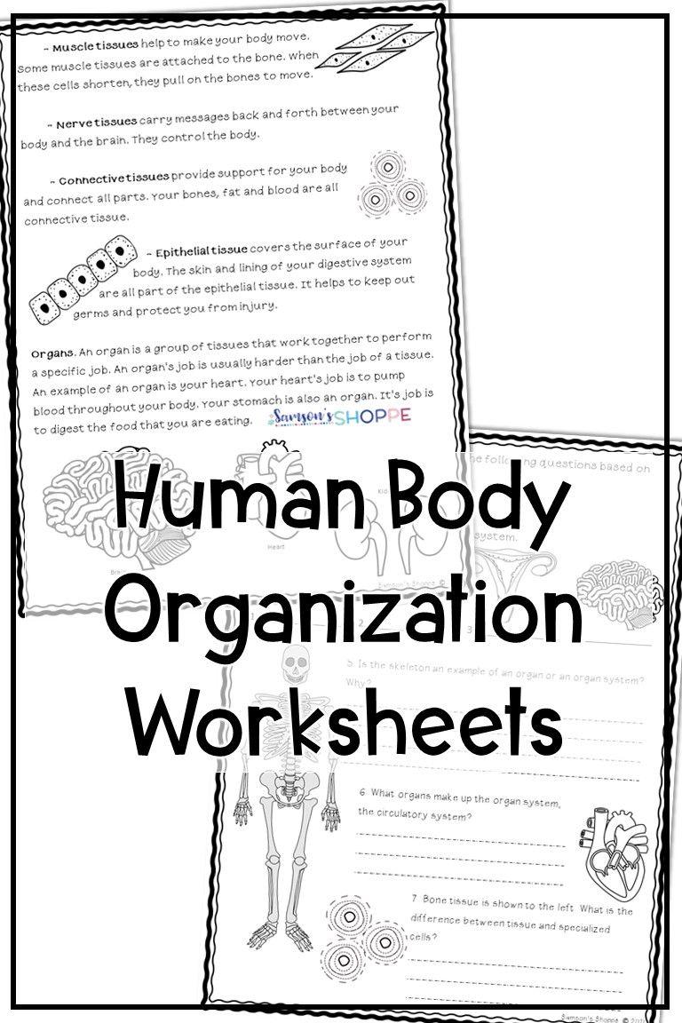 small resolution of Human Body Organization Worksheet   Human body reading