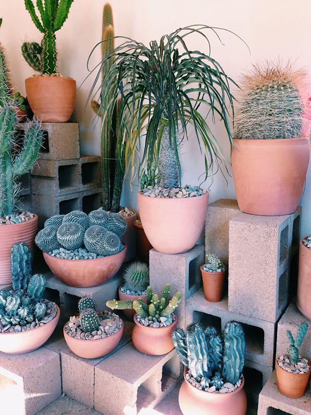 Photo of Hot Cactus LA | Jungalow by Justina Blakeney