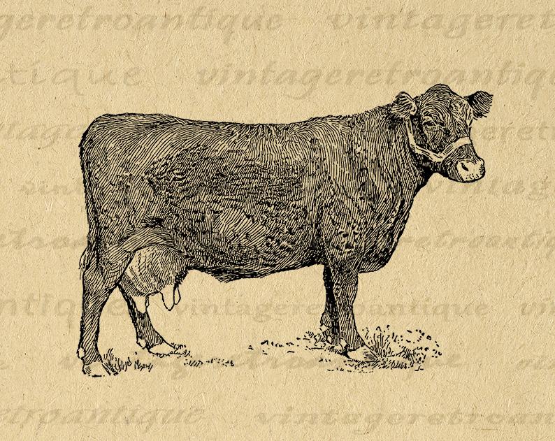 Digital Farm Cow Printable Graphic Illustration Image Download Vintage Clip Art Printable Digital Image Art Clip Art Vintage Farm Cow Graphic Illustration