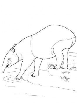 View Tapir Cartoon Drawing PNG