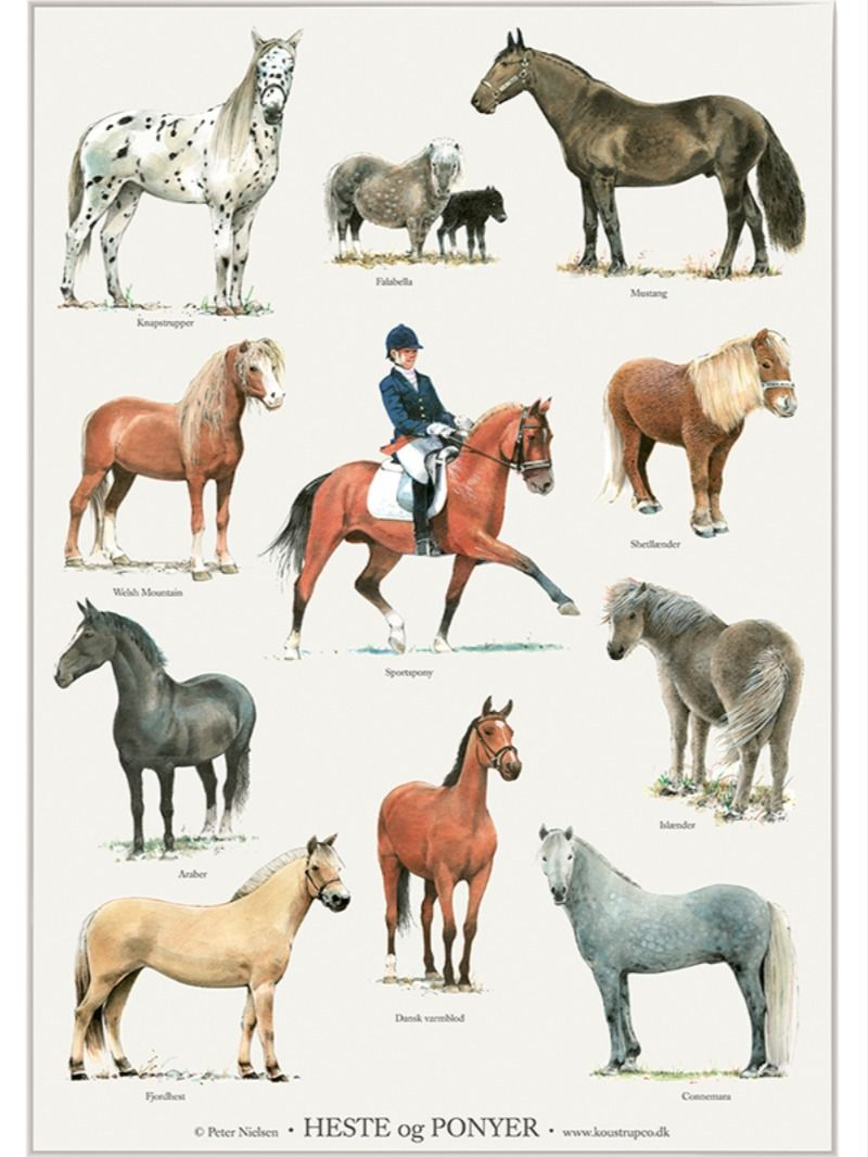 Heste Og Ponyer Plakat Horses And Ponies Poster In 2020 Animal Posters Horses Animals