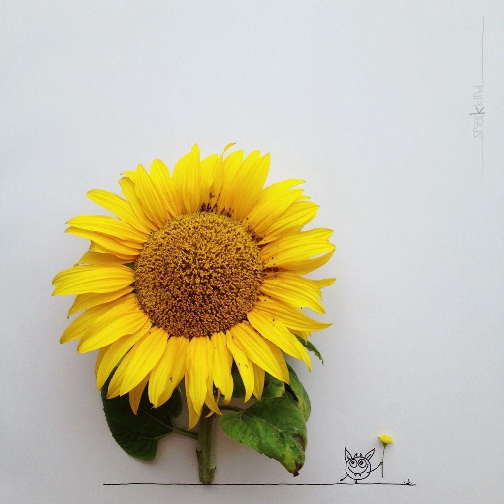 Sunflower yeah khiesti kerstin hiestermann pinterest