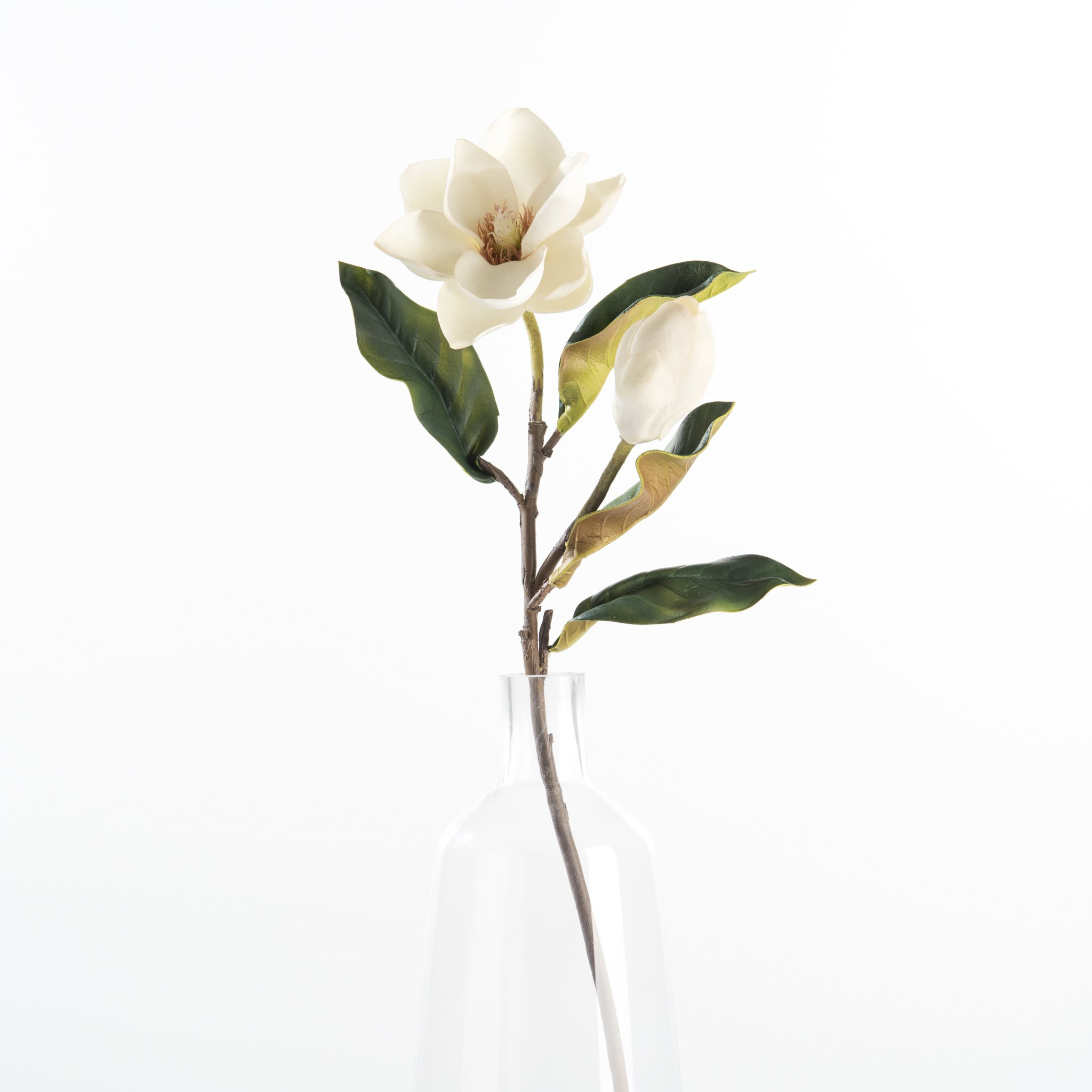 Magnolia Bud And Bloom Stem Magnolia Flower White Magnolia Flower Aesthetic