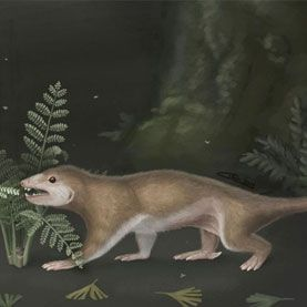 A fossil of the forest-floor-dwelling animal Megaconus suggests that its group predated mammals � whereas a fossil of its tree-dwelling cousin Arboroharamiya seems to show that the group belonged in the mammalian family tree.