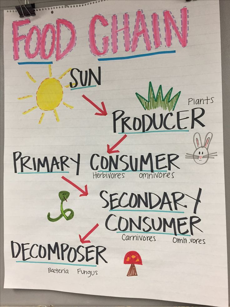 Food Chain Anchor Chart | Science anchor charts, Upper elementary ...