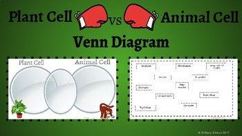 Plant Cell vs Animal Cell Venn Diagram   Animal cell ...