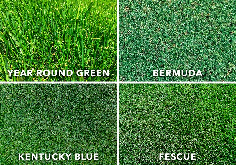 Grotrax Grass Lawn Repair Lawn Repair Lush Lawn Lawn Care