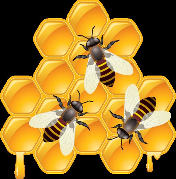 abeilles bee honey pinterest bienen honig und insekten. Black Bedroom Furniture Sets. Home Design Ideas