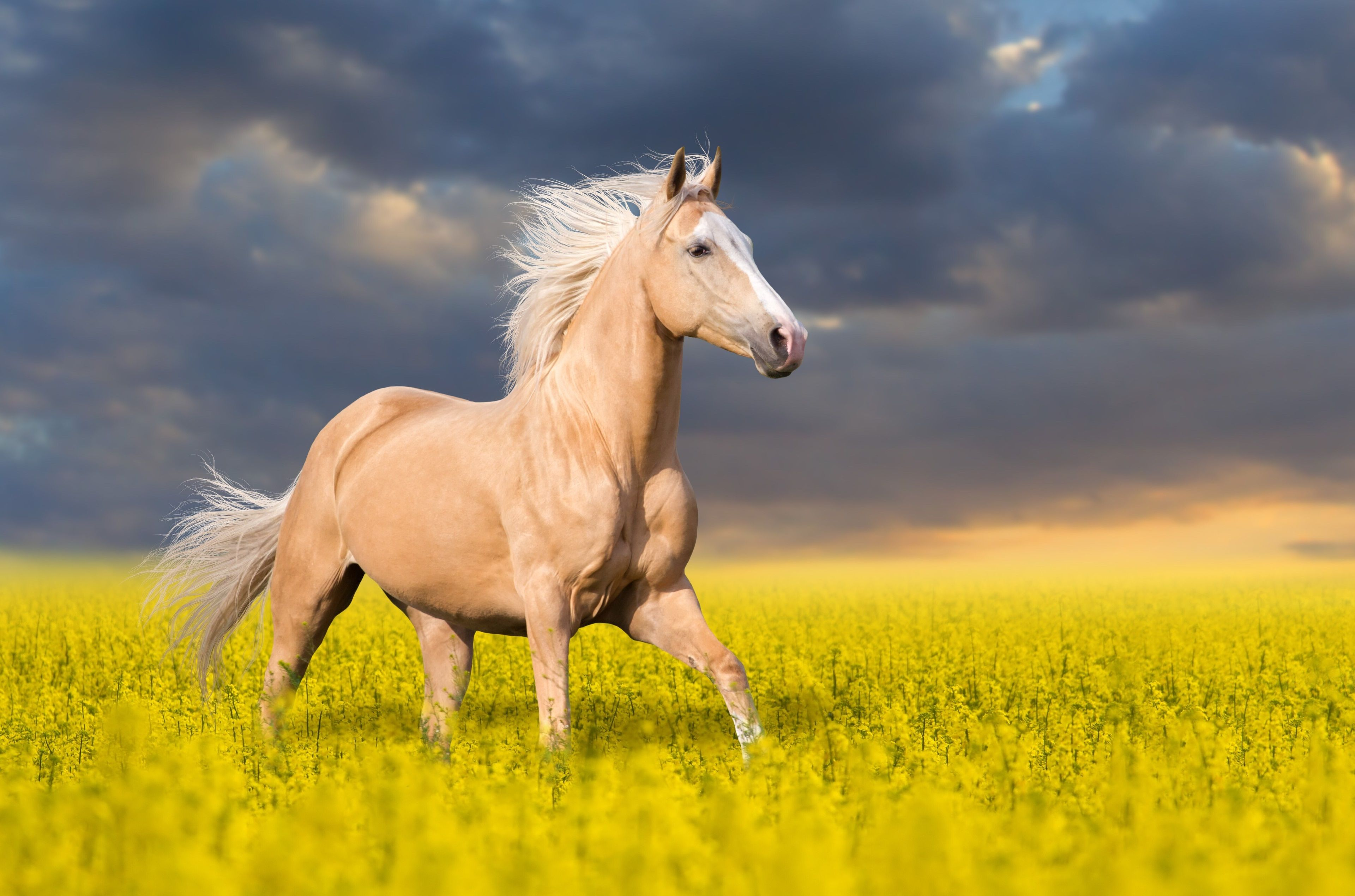 Download Wallpaper Horse High Definition - cad0ad2acd4383bc1c6f2afc117f7e43  Image_223488.jpg