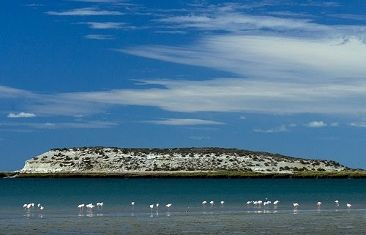 Guatemala's isla de pájaros - a pair of islands that became a nature reserve in 1967. Home to thousands of waterbirds including egrets, gulls, oystercatchers, flamingos, terns, and Magellanic penguins.