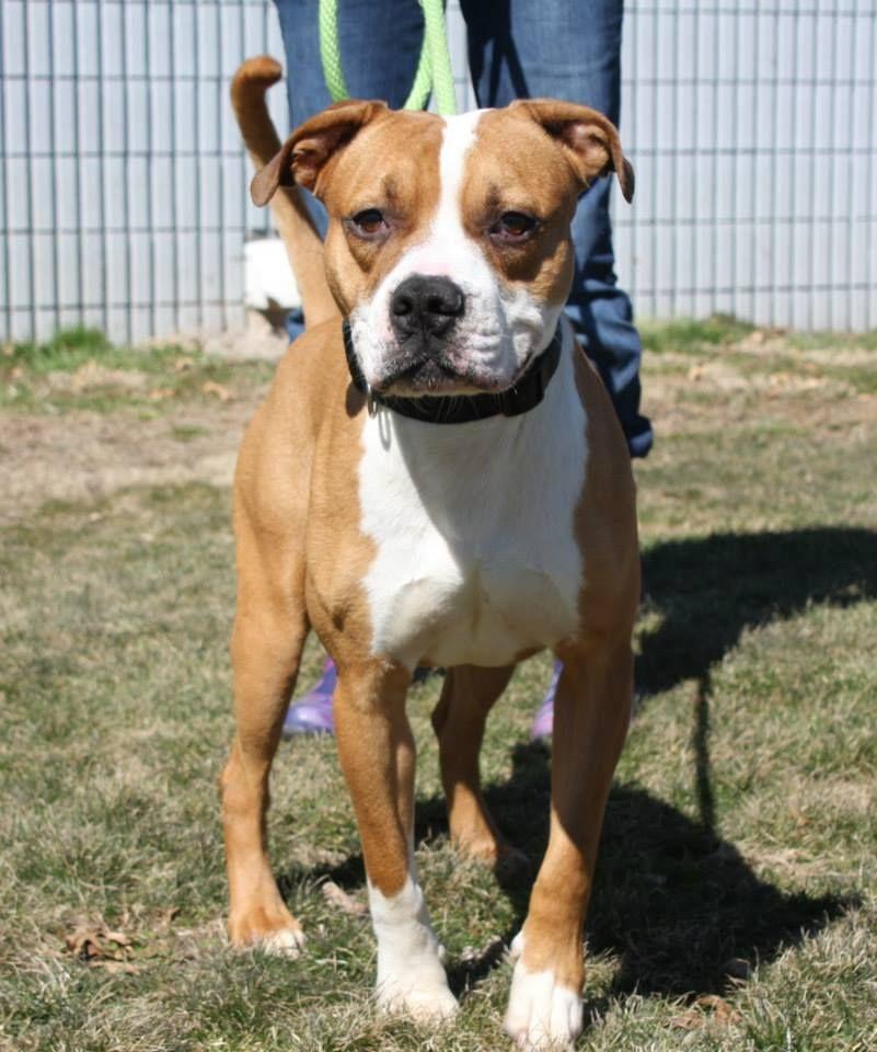 URGENT EUTH ALERT FOR PRINCETON IN GASSING SHELTER Dog