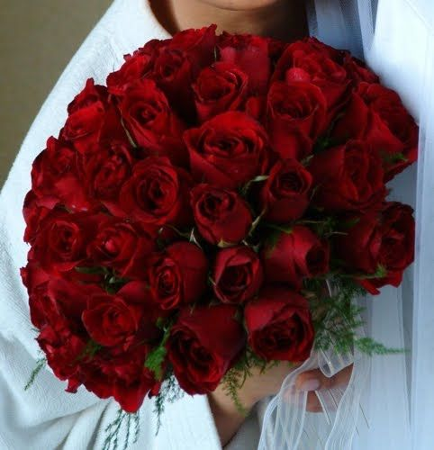 Roses Are The Most Popular Flowers In World With Red Rose Being Leading Lady And A Recognized Symbol Of Love All Over