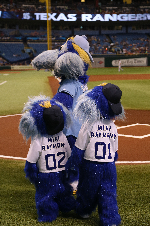 Raymond Raysraymond Tampa Bay Rays Tampa Bay Tampa