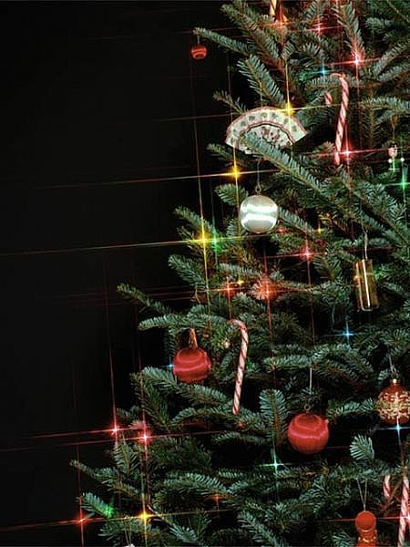 Tips to caring and preserving Christmas trees | Holidays & Events ...