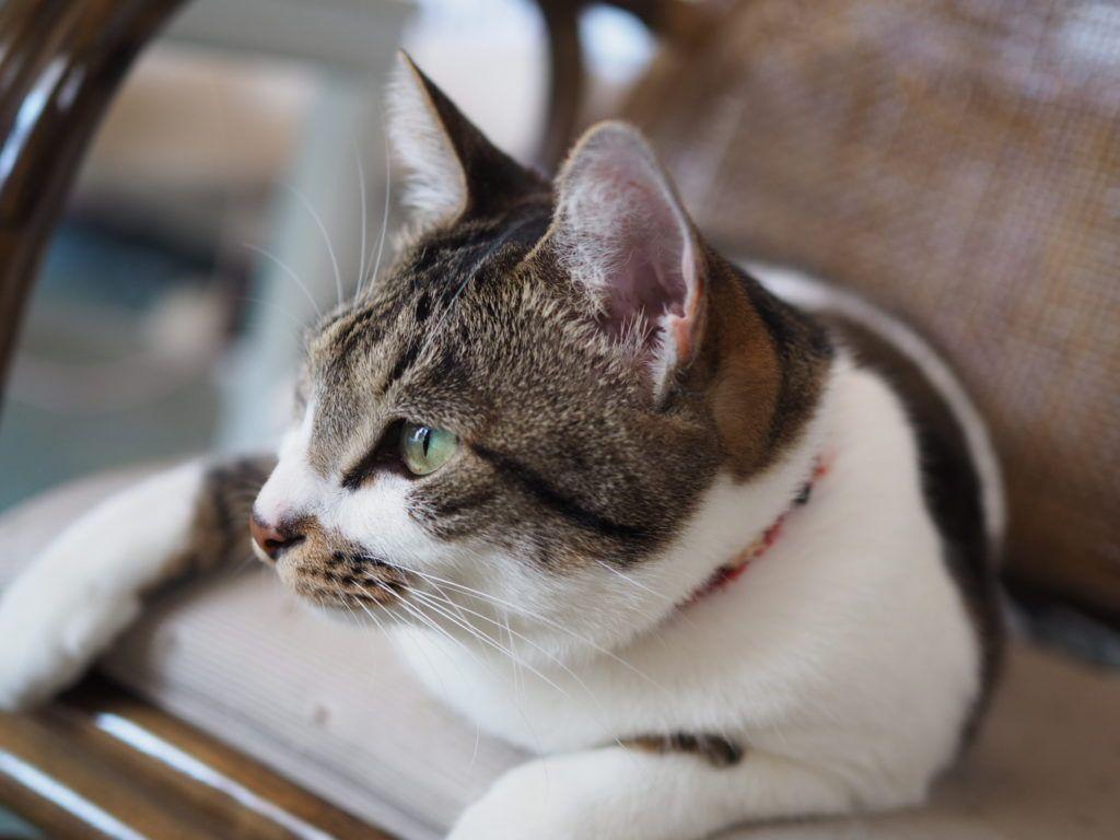 猫の粗相は治らないこともある 特に寝室の布団の粗相は注意 ゆるりねこblog 猫 ねこ 子猫