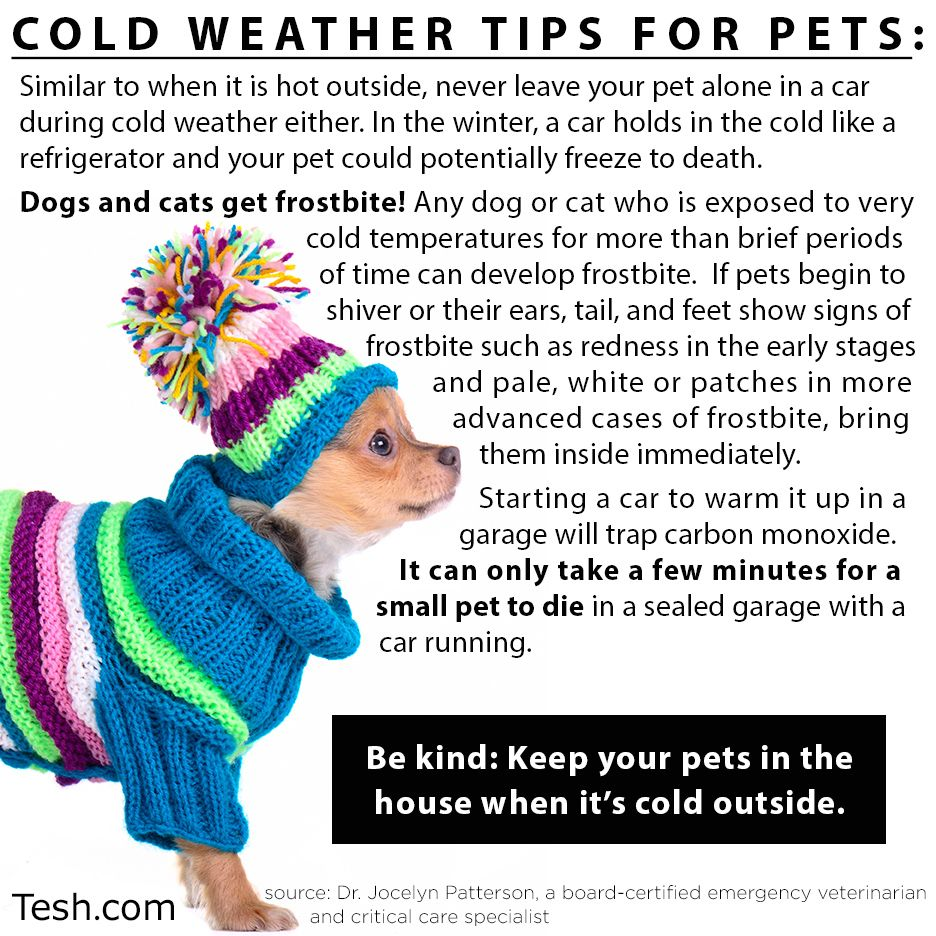 Keep your pets safe from this harsh winter! teshtips