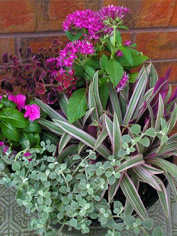 Sun container garden purple silver flowers foliage licorice plant vinca cora coleus - Container gardens for sun ...