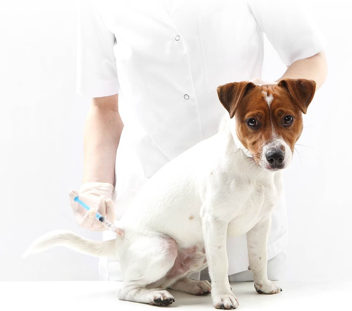 Pin about Veterinary services and Surgery on Pet Microchip