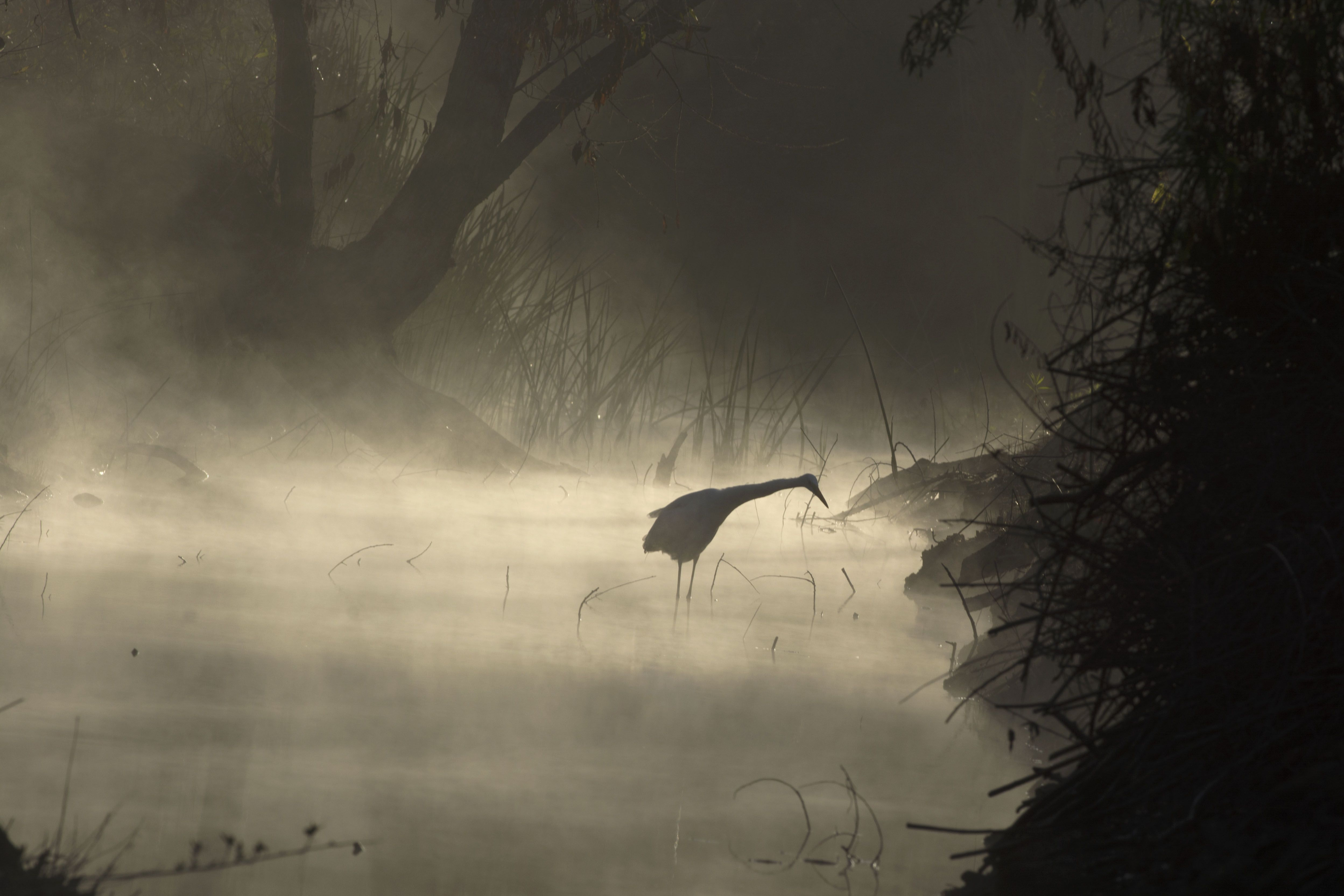 National Wildlife® Photo Contest Gallery
